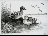 6 -- 1939 -- Hunt -- Green-Winged Teal