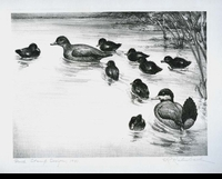"<font color=""#808080"">8 -- 1941 -- Kalmbach -- Ruddy Ducks</font>"