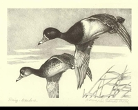 "<font color=""#808080"">21 -- 1954 -- Sandstrom -- Ring-Necked Ducks</font>"