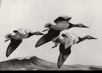 "<font color=""#808080"">32 -- 1965 -- Jenkins -- Canvasbacks</font>"