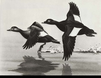 "<font color=""#808080"">36 -- 1969 -- Reece -- White-Winged Scoters</font>"