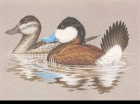 "<font color=""#808080"">48 -- 1981 -- Wilson -- Ruddy Ducks</font>"