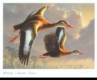 57 -- 1990 -- Hautman, Jim -- Black-Bellied Whistling Ducks