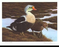 58 -- 1991 -- Howe -- King Eiders