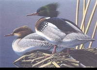 "<font color=""#808080"">61 -- 1994 -- Anderson, Neal -- Red-Breasted Mergansers</font>"