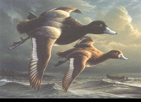 66 -- 1999 -- Hautman, Jim -- Greater Scaup