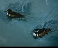 HARRIS-CHING:  HOODED MERGANSERS</a><br><b>- SOLD</b>