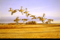 "WILDE:  PRAIRIE CHICKENS</a><br><font color=""#ffffff""><b>- SOLD</b></font>"