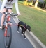 1-Running-Dog Bike Tow Leash