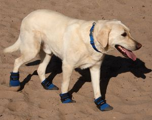 Ultra Paws Cool Boots