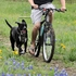 Walky Dog PLUS® Dog Bike Leash