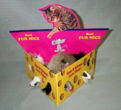 "3"" Fur Mouse in Cheese Box 12/box"