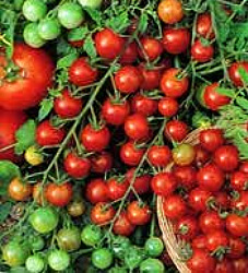 Tomato - Large Cherry Seeds