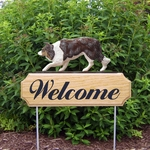 Border Collie DIG Welcome Stake-Red Merle