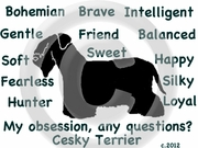Cesky Terrier Obsession Tshirt