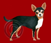 Chihuahua Original Artwork Greeting cards - Set of Five