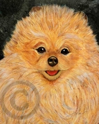 Pomeranian Original Artwork Greeting cards - Set of Five