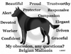 Belgian Malinois Obsession T-Shirt