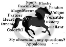 Appaloosa Horse Obsession Long Sleeve T-Shirt