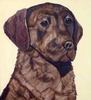 Chesapeake Bay Retriever Original Art T-Shirt