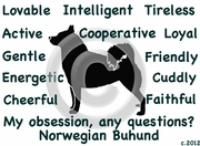 Norwegian Buhund Obsession Tshirt