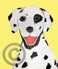 Dalmatian Original Artwork Greeting cards - Set of Five
