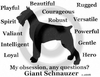 Giant Schnauzer Obsession Sweatshirt