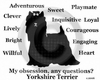 Yorkshire Terrier Obsession Sweatshirt