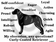 Curly-Coated Retriever Obsession Long Sleeve T-Shirt