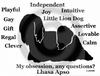 Lhasa Apso Obsession T-Shirt