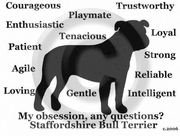 Staffordshire Bull Terrier Obsession T-Shirt