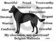 Belgian Malinois Obsession Long Sleeve T-Shirt