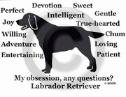 Labrador Retriever Obsession Long Sleeve T-Shirt