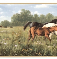 Horses in Field Wallpaper Border HB112203b