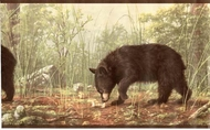 Black Bears Wallpaper Border HB112101b