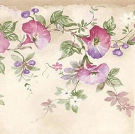 Morning Glory Vine Wallpaper Border MKB5084