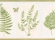 Butterfly Fern Botanical Wallpaper Border 63296420