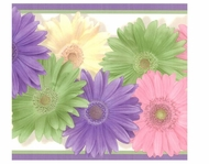 Colorful Daisies Wallpaper Border