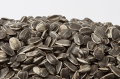Raw In-Shell Sunflower Seeds (12 oz Bag)