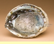 Large Genuine Abalone Smudging Shell