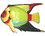 Large Queen Angel Fish Decor