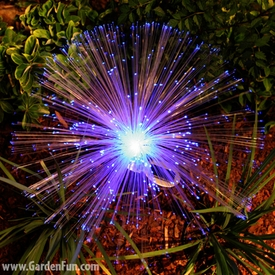 Solar Fiber-Optic Garden Stakes (2-pack) - Click to enlarge