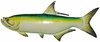Tarpon Fish Wall Decor