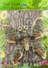 Butterfly Tree Art