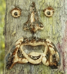 Yelling Tree Face
