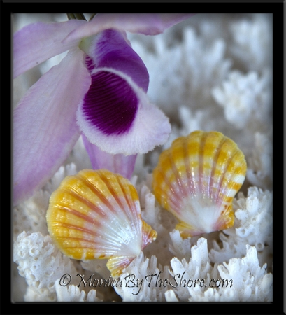 Yellow, Pink & White Baby Hawaiian Sunrise Shells Post Earrings