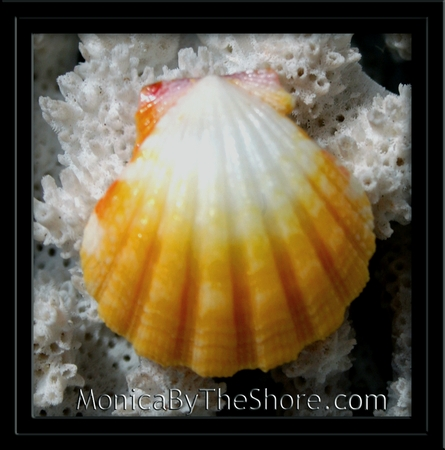 Bright Yellow & White Sunrise Shell Pendant
