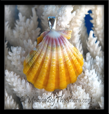 """Sunrise"" Sunrise Shell Pendant from Hawaii"