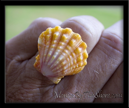 Over-sized Hawaiian Mango Sunrise Shell Fancy Sterling Silver Ring