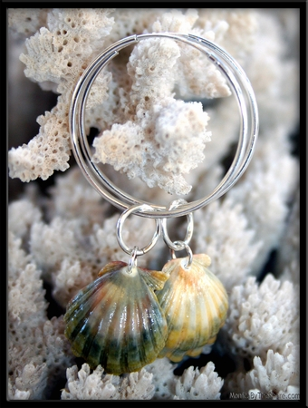 Green Sunrise Shells Silver Hoops & Rings